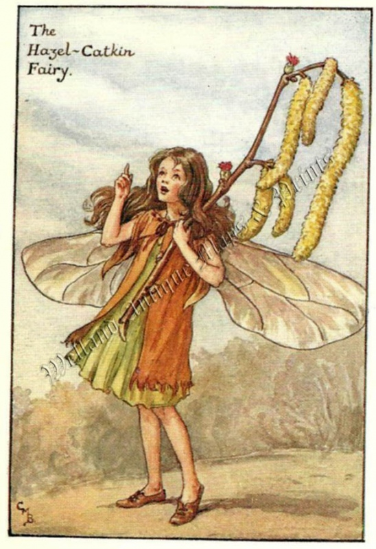 The Hazel Catkin Fairy