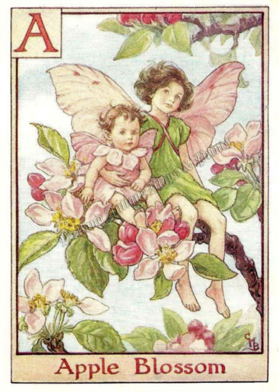 The Apple Blossom Fairy