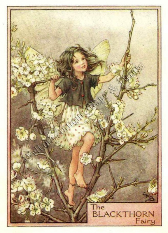 The Blackthorn Fairy