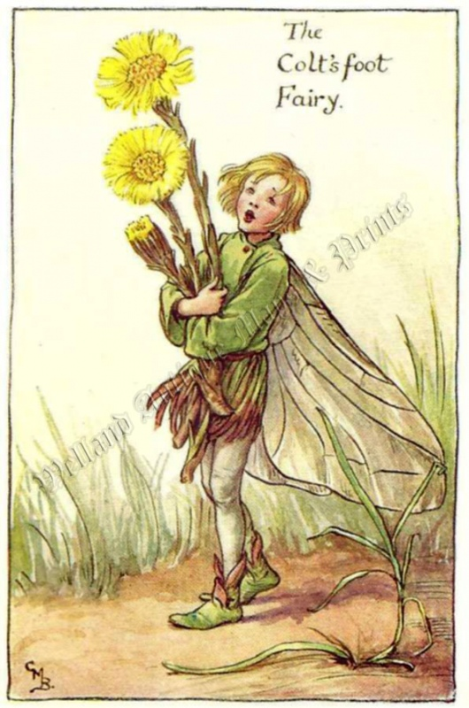 The Colt's Foot Fairy