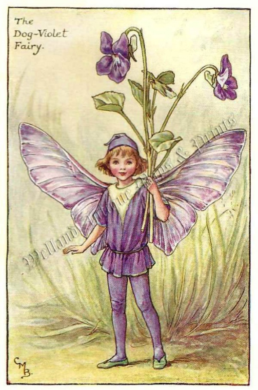 The Dog Violet Fairy