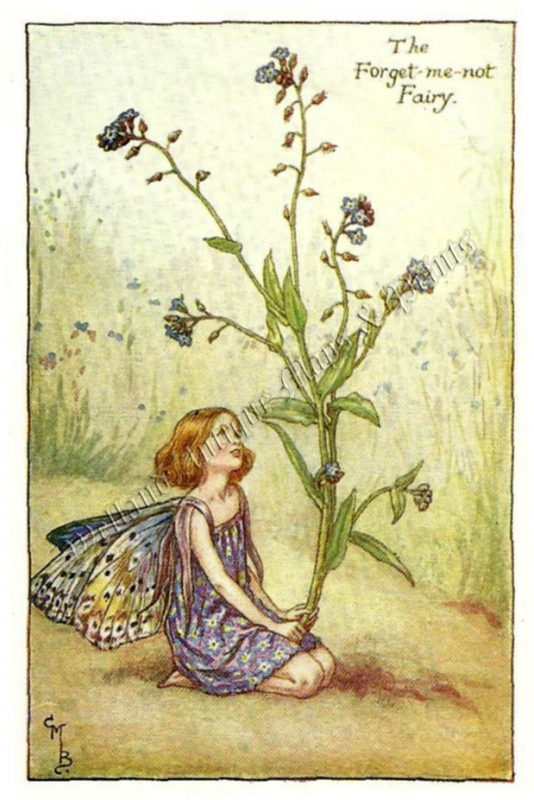 The Forget-me-not Fairy