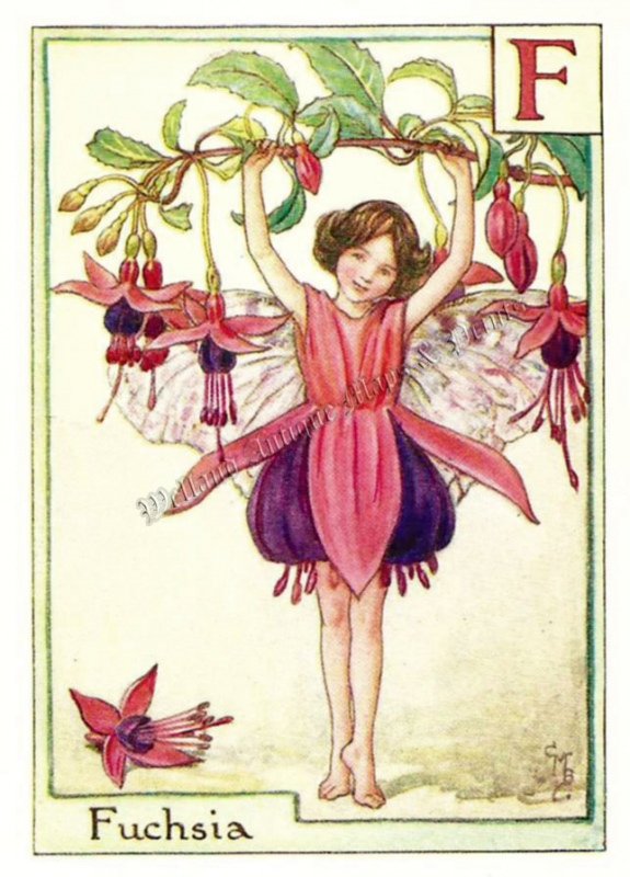 The Fuchsia Fairy
