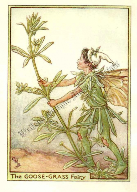 The Goose Grass Fairy