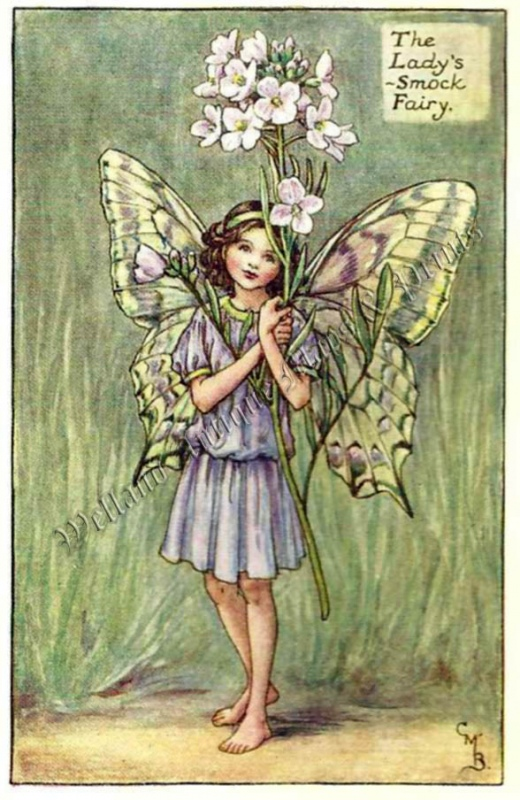 The Lady's Smock Fairy