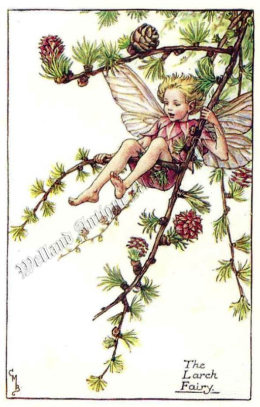 The Larch Fairy
