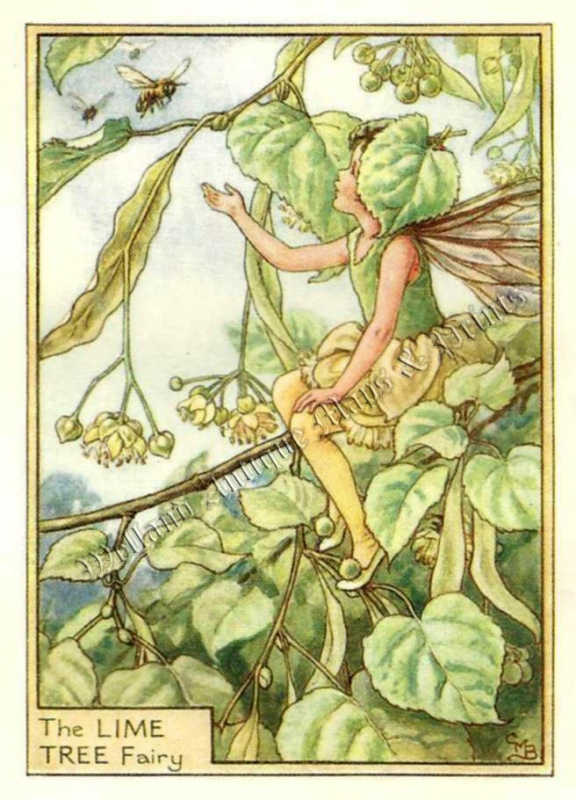 The Lime Tree Fairy