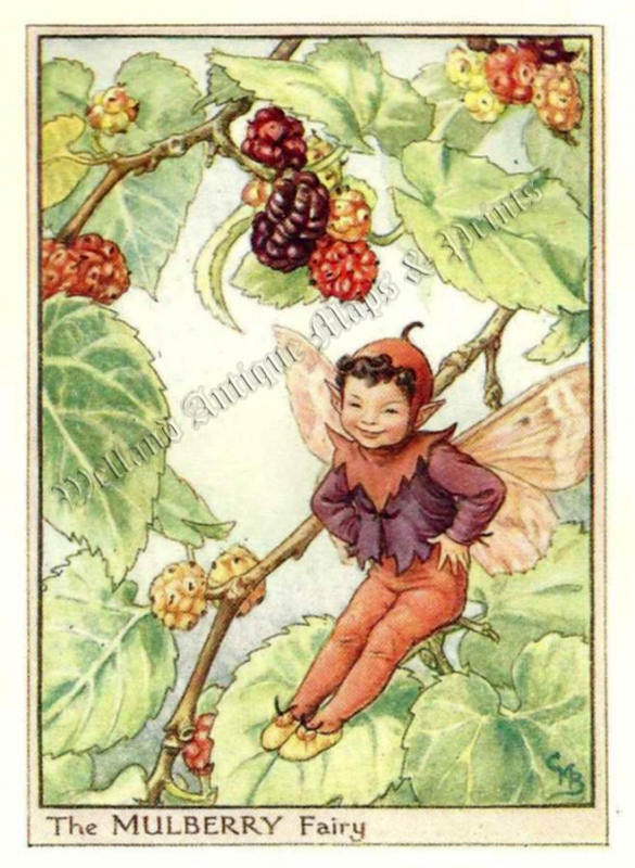 The Mulberry Fairy