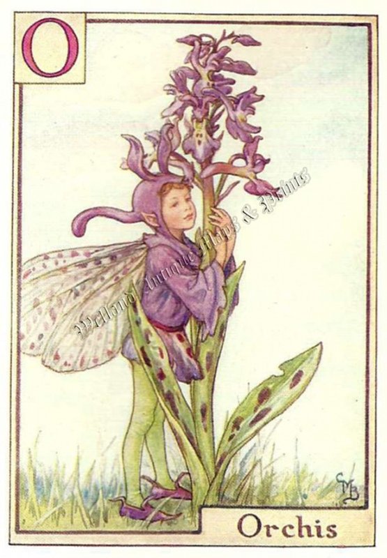 The Orchis Fairy