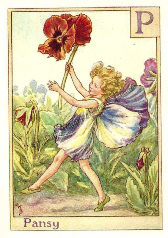 The Pansy Fairy