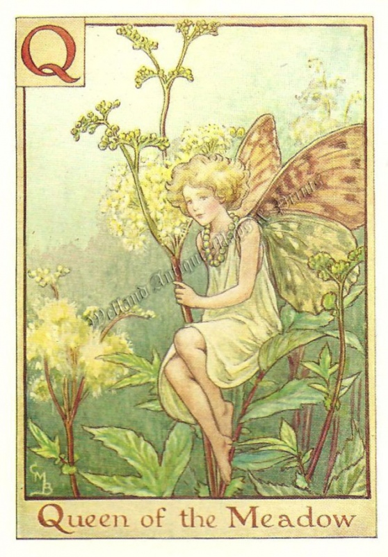 The Queen of the Meadow Fairy
