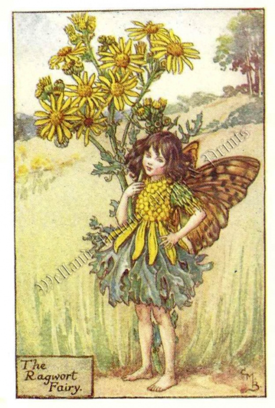 The Ragwort Fairy