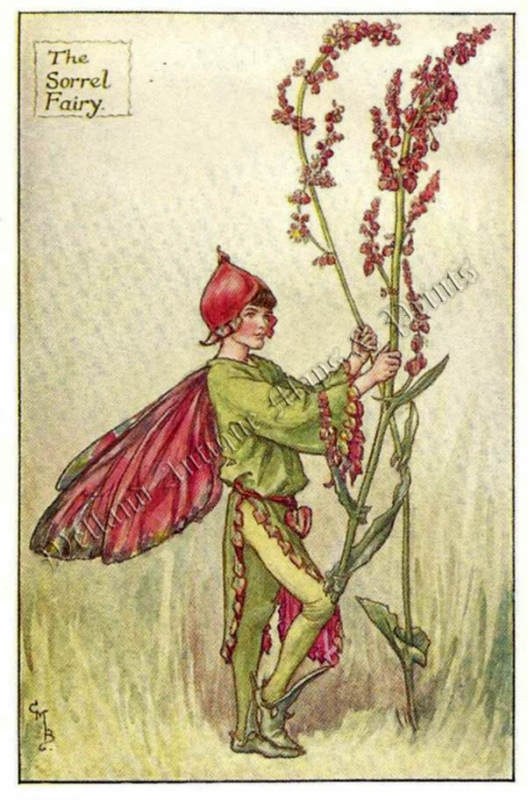 The Sorrel Fairy