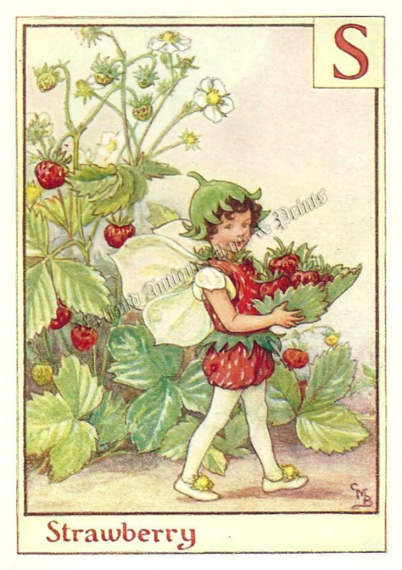 The Strawberry Fairy