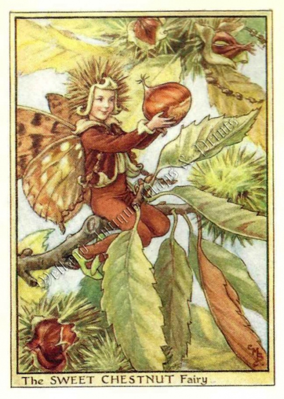 The Sweet Chestnut Fairy