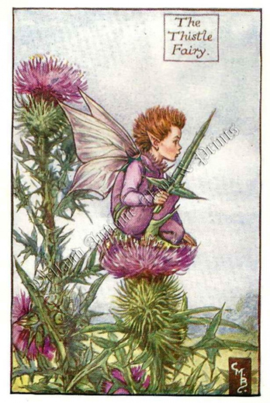 The Thistle Fairy