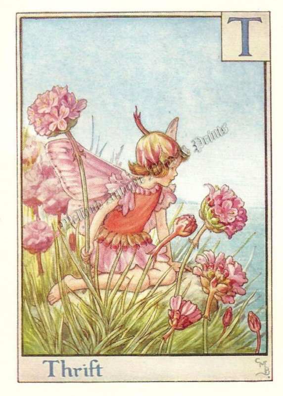 The Thrift Flower Fairy