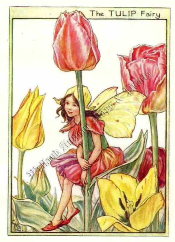 The Tulip Fairy