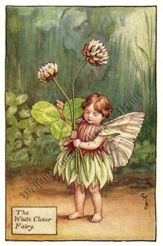 The White Clover Fairy