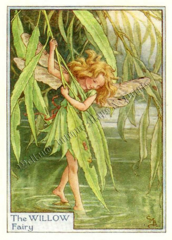The Willow Fairy